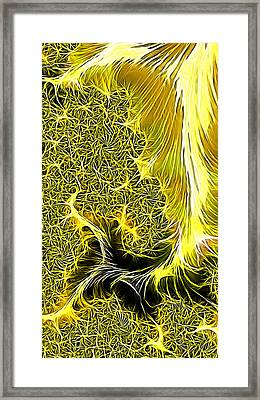 Mohadi Framed Print by Jeff Iverson