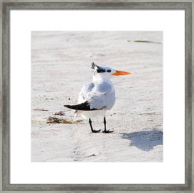 Mohawk Man Framed Print by Margie Amberge