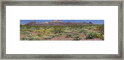 Mojave Desert Floral Display Framed Print by Jennifer Nelson