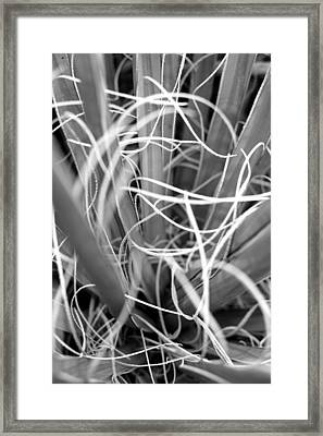 Mojave Yucca Framed Print by Diana Shay Diehl
