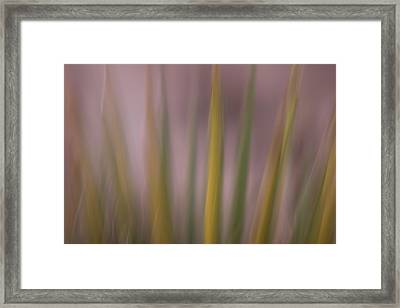 Mojave Yucca Plant, Yucca Schidigera Framed Print by Phil Schermeister