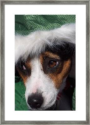 Mojo's New Holiday Coat Framed Print by Claudia Goodell