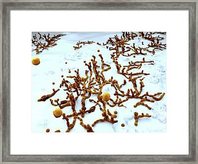 Mold On Wallpaper Framed Print by Juan Gaertner