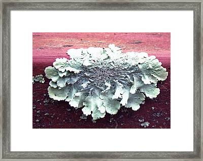 Mold Portrait Framed Print by Barbara McDevitt