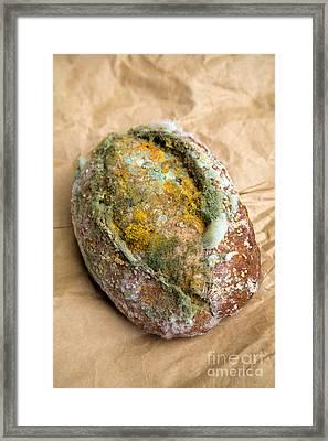 Moldy Bread Roll Framed Print