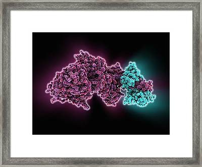Molecular Motor Protein Framed Print by Science Photo Library