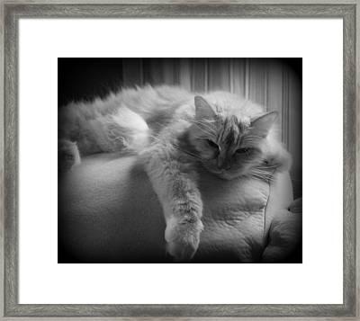 Mollie Framed Print by Carolyn Ricks