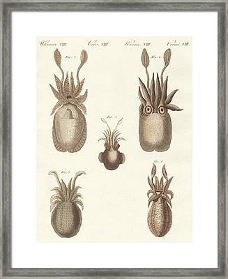 Molluscs Or Soft Worms Framed Print