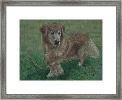 Molly And Her Stick Framed Print by Debbie Stonebraker