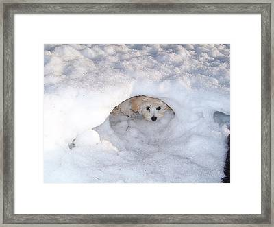 Molly Hidding In Her Snow Cave Framed Print by Sheila Byers