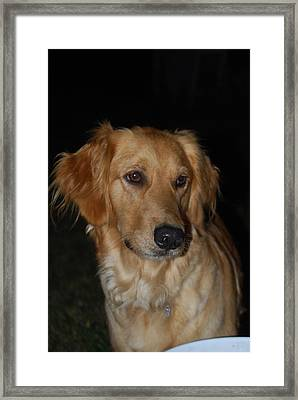 Framed Print featuring the photograph Molly by Ramona Whiteaker