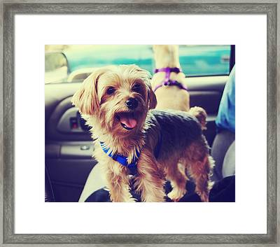 Molly's Road Trip Framed Print