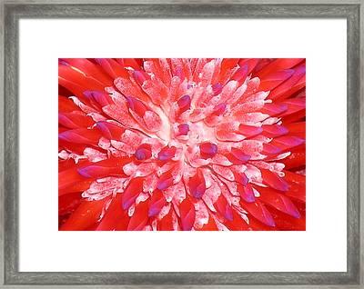 Molokai Bromeliad Framed Print