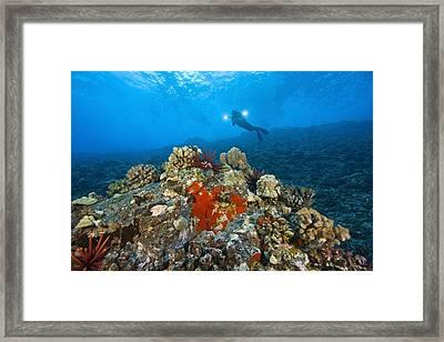 Molokini Crater Maui Hawaii Usa A Framed Print by Stuart Westmorland