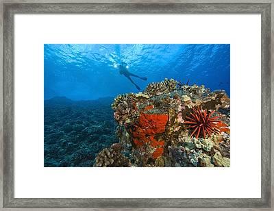 Molokini Crater, South Maui, Hawaii Framed Print by Stuart Westmorland