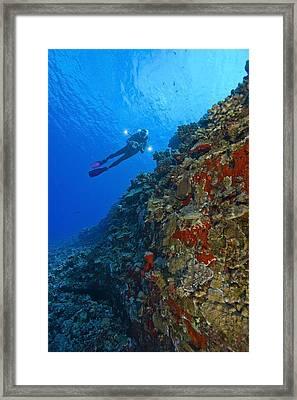 Molokini Maui Hawaii Usa Scuba Diver At Framed Print by Stuart Westmorland
