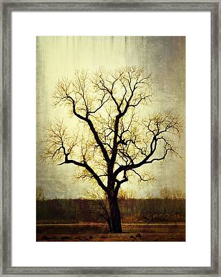 Molted Tree Framed Print by Marty Koch