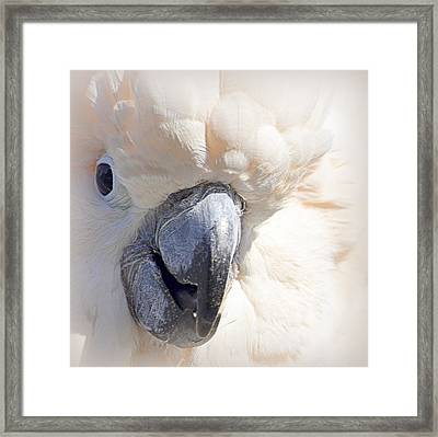 Framed Print featuring the photograph Moluccan Close Up by AJ  Schibig