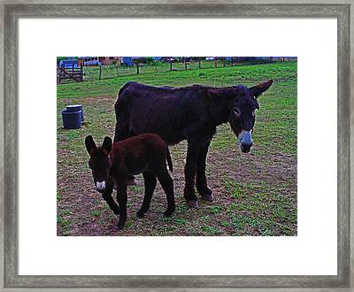 Mom And Baby Donkey Framed Print by Tom Janca
