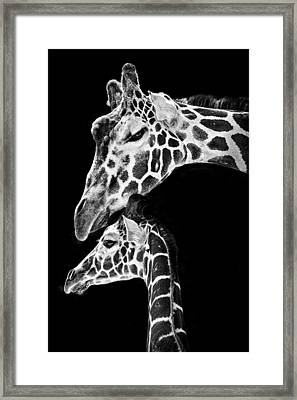 Mom And Baby Giraffe  Framed Print by Adam Romanowicz