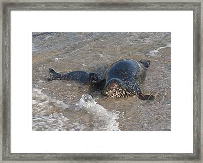 Framed Print featuring the photograph Mom And Baby Harbor Seal by Lee Kirchhevel