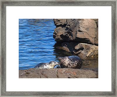 Mom And Baby Seal Framed Print by Frieda Cron