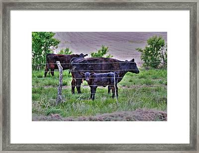 Mom And Calf Framed Print