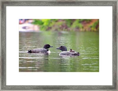 Mom And Dad Loon With Baby On Back Framed Print