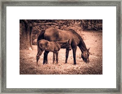 Mom And Foal Framed Print by Mary Timman