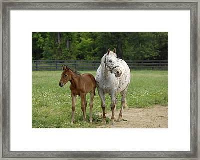 Framed Print featuring the photograph Mom And Foal by Sami Martin