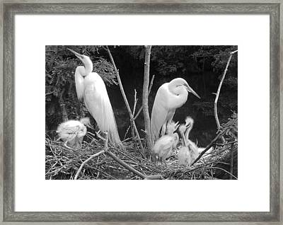 Mom And Pop And Chicks In Black And White Framed Print