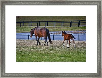 Mom Leading The Way Framed Print