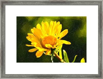 Moment In The Sun - Golden Flower - Northern California Framed Print