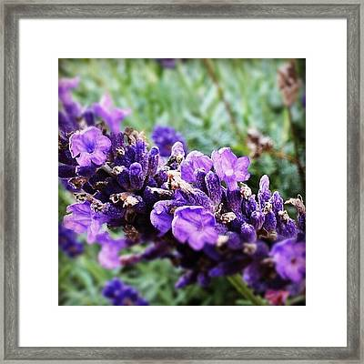 Moment Framed Print