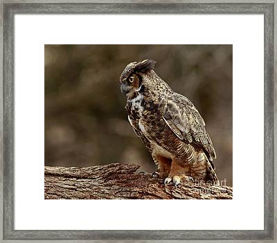 Moments In The Forest Great Horned Owl  Framed Print by Inspired Nature Photography Fine Art Photography