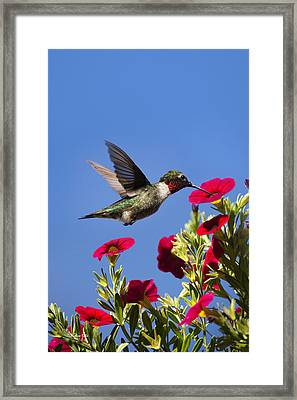 Moments Of Joy Framed Print