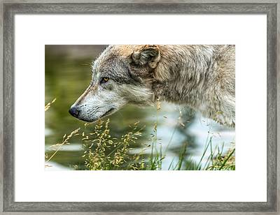 Momentum Framed Print by Yeates Photography