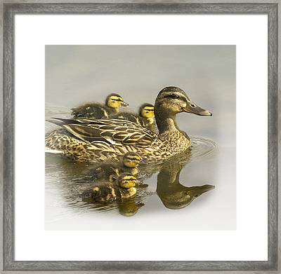 Momma And Babies Framed Print