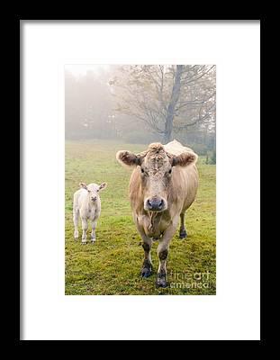 Family Farm Framed Prints