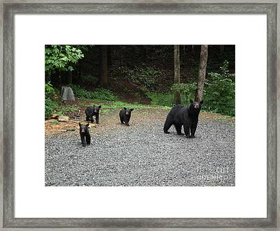 Framed Print featuring the photograph Momma And Three Bears by Jan Dappen