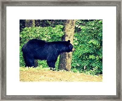 Framed Print featuring the photograph Momma Bear by Jan Dappen