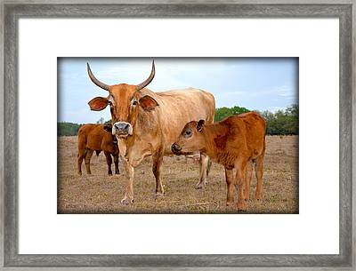 Framed Print featuring the photograph Mommy And Baby Cows by Amanda Vouglas