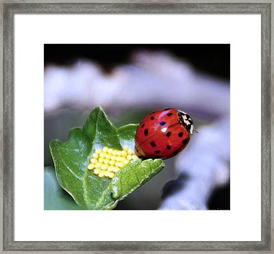 Mommy Ladybug Framed Print
