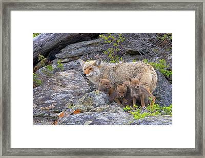 Mom's Back Framed Print by Aaron Whittemore