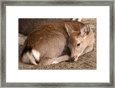 Mom's Got My Back Framed Print