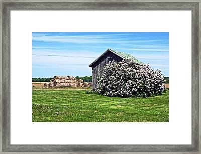 Moms Lilac Barn Framed Print by Cheryl Cencich