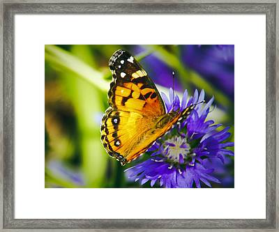 Monarch And Flower Framed Print