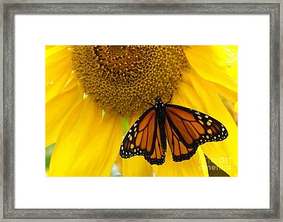 Monarch And Sunflower Framed Print by Ann Horn