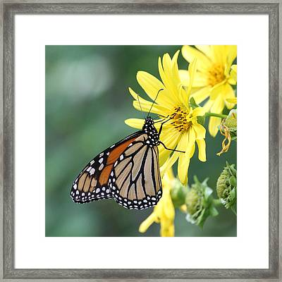 Framed Print featuring the photograph Monarch Beauty by Doris Potter
