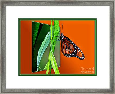 Monarch Butterfly 01 Framed Print by Thomas Woolworth